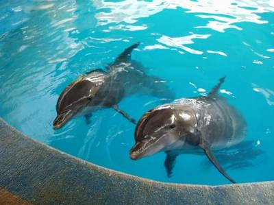 [تصویر: park-dolphins1-kish.jpg]